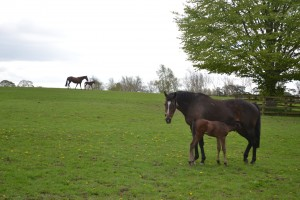 Equine Industry & Agriculture