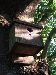 Habitat Management & Biodiversity Bird nesting box