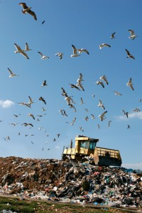 Landfills - Wildlife Ireland