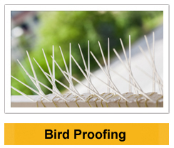 Bird Proofing wildlife management