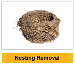 Nesting Removal