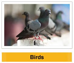 Birds wildlife management