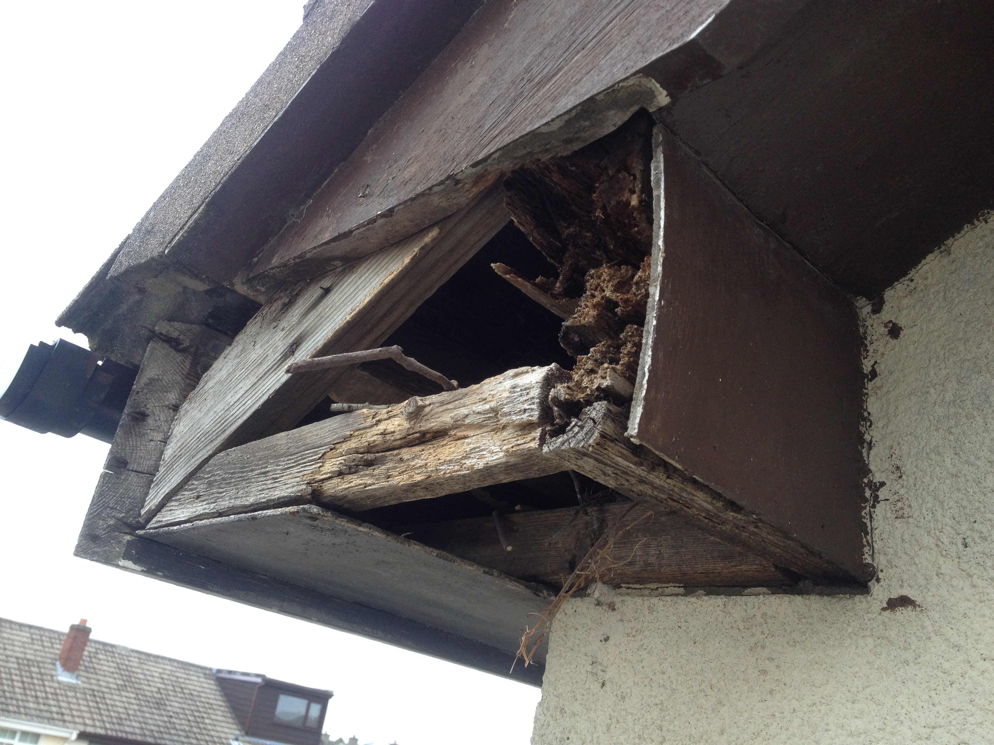 Nest Removal Before Pic Wildlife Management