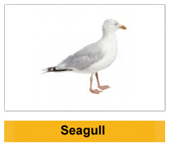 Seagull Wildlife Management Ireland