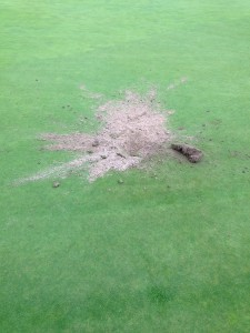 Fox Damage on a pristine putting green