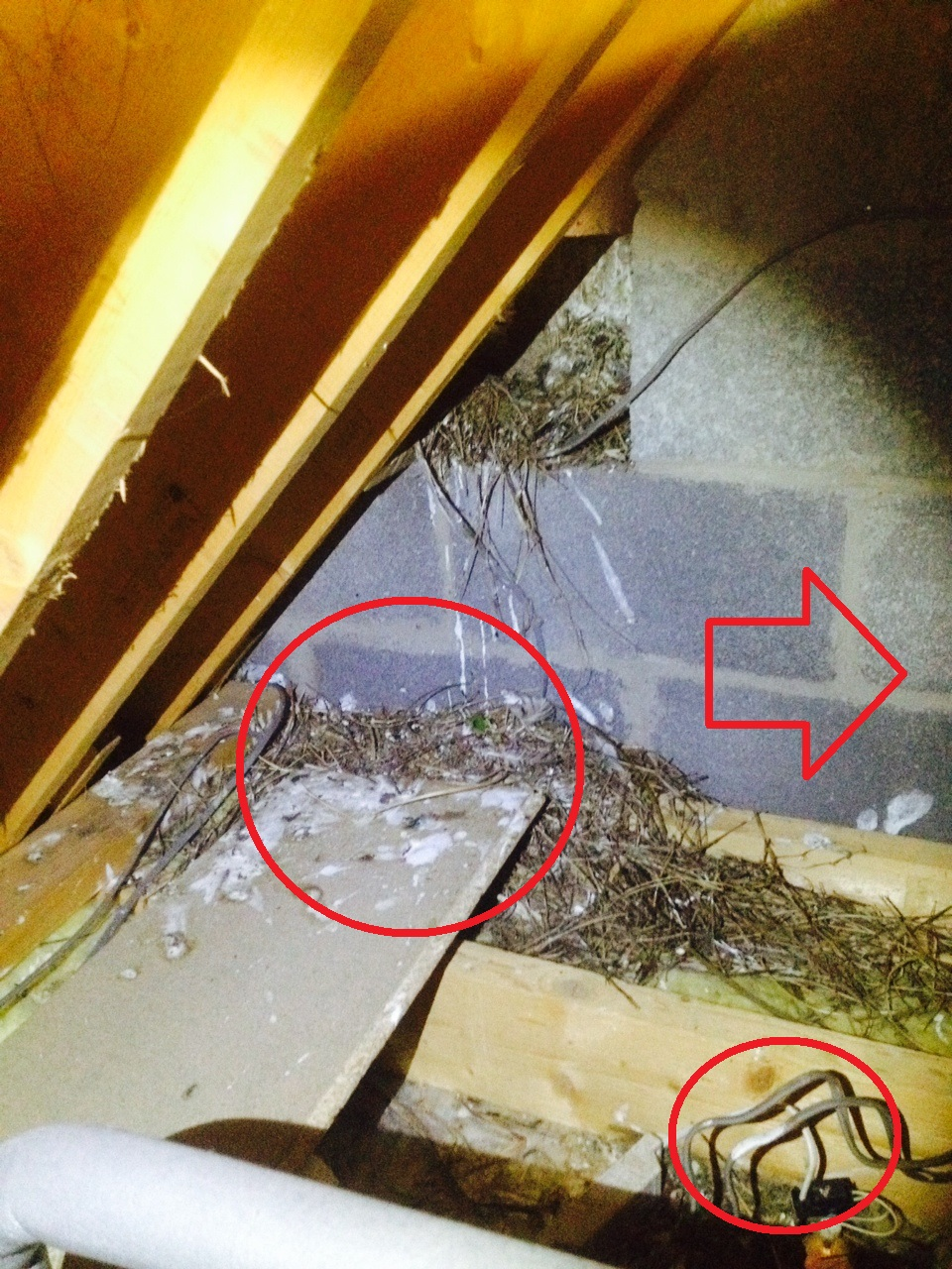 Dangers Of Nesting Birds Wildlife Management Discuss About Home Wiring Hazards And Electrical In Your There Is A Strong Risk That The Material To Blood Feeding Parasites Other Insects Who Can Easily Make Their Way Along Wall Into